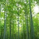 bamboo vloer productie foto 07