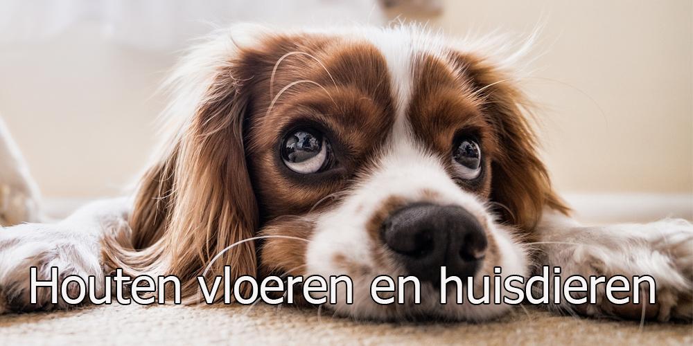 huisdieren en houten vloeren
